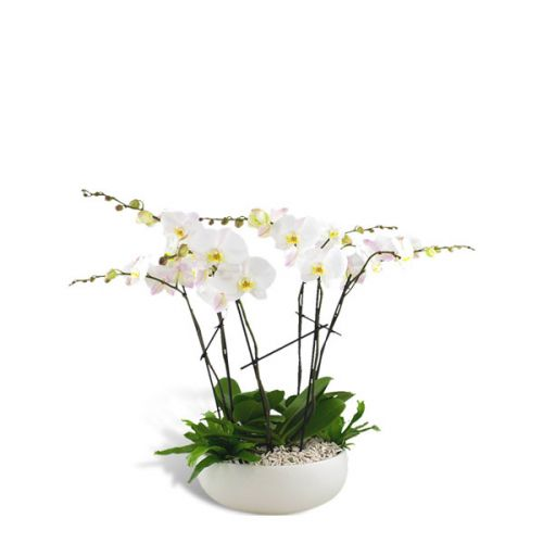 Radiant Orchid 6 Stem Planter
